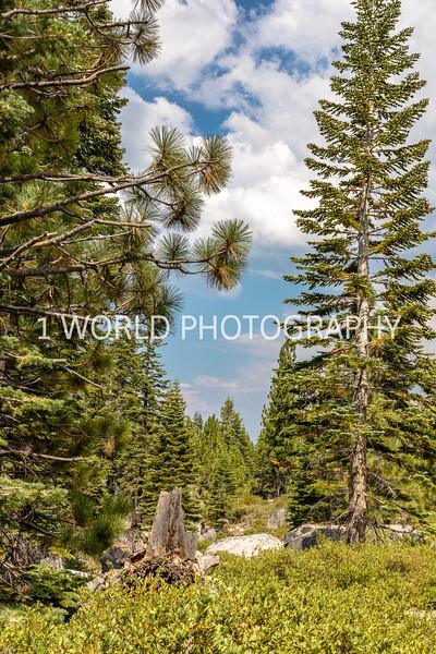 San Fran_Lake Tahoe Trip 2017-1360-76.jpg