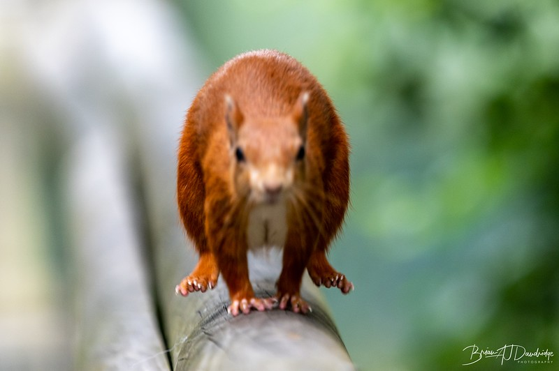 British Wildlife Centre_Z6-7331.jpg