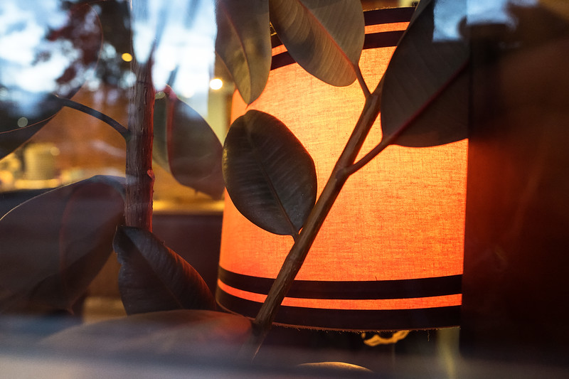 Orange Lampshade and Plant Leaves