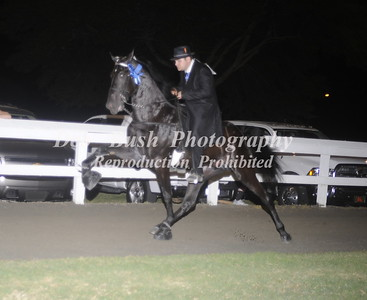 CLASS 22 FOUR YR OLD OPEN SPECIALTY