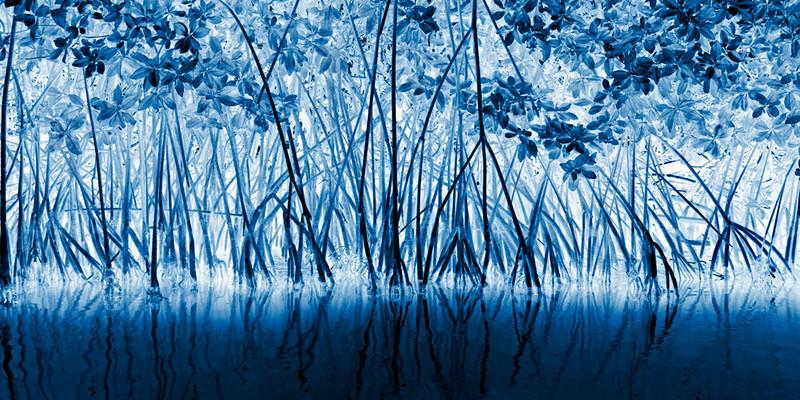 Mangrove-in-Blue_WEB_50910_Ted_Davis.jpg