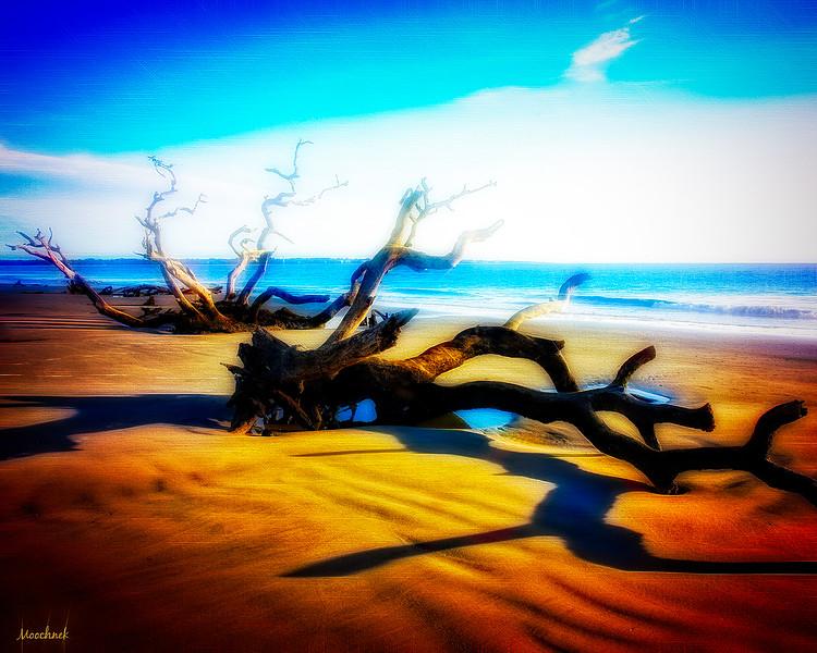 trees_DSC3565-copy.jpg