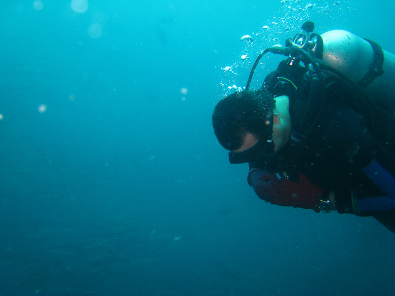 Diving in the Galapagos (277 of 392)