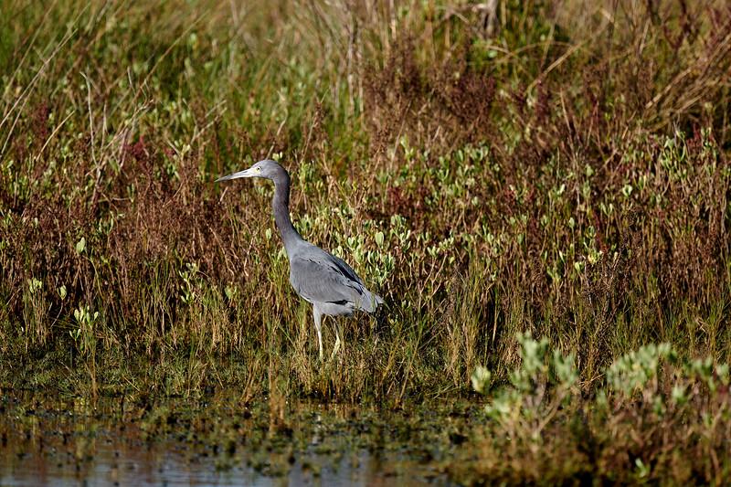 20181103 - Brazoria Wildlife Refuge-85B_4003.jpg
