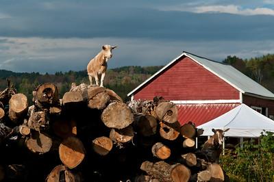 Evening Song Farm 2011