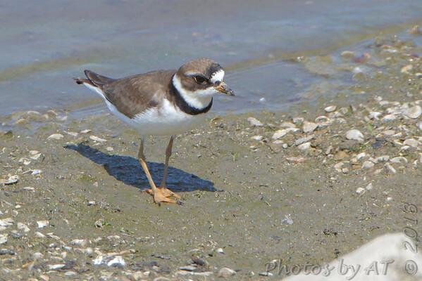 2018-05-16 Riverlands Migratory Bird Sanctuary