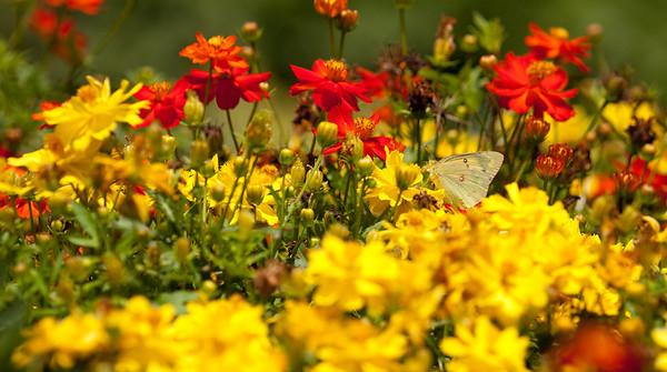 Meadowlark Botanical Gardens, July 4th Weekend