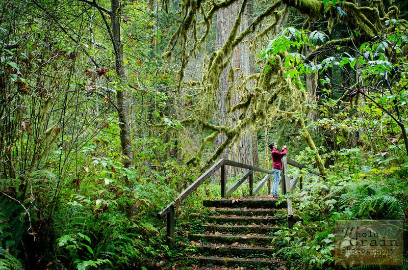 20141015_Redwoods_0035.jpg