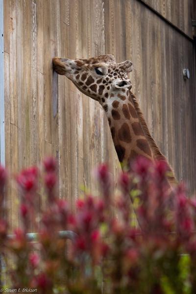 SF Zoo 2011