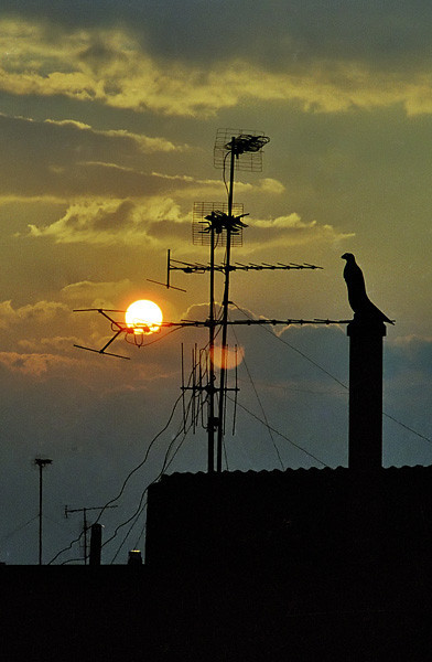 Sunset behind the antennas