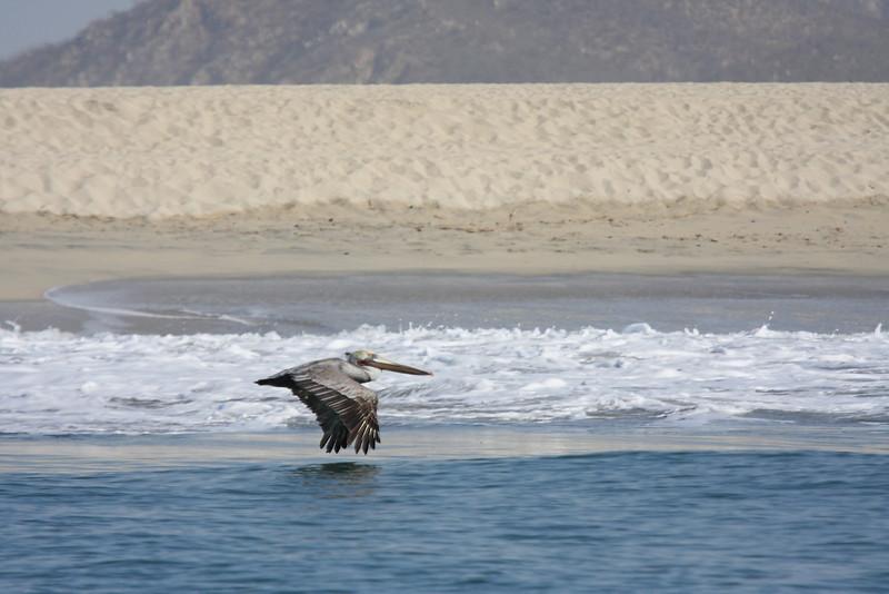 Mexico_Cabo_2011 28.JPG