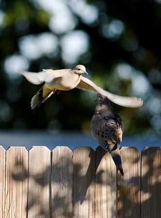 Baylands Birds 070315