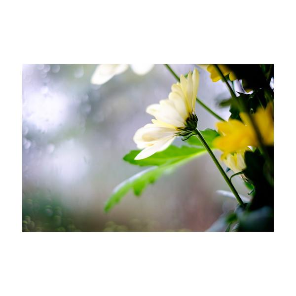 76_Flowers_10x10.jpg