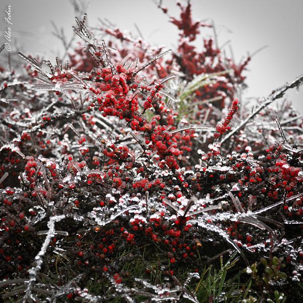 Snoqualmie Falls in a Winter - WA
