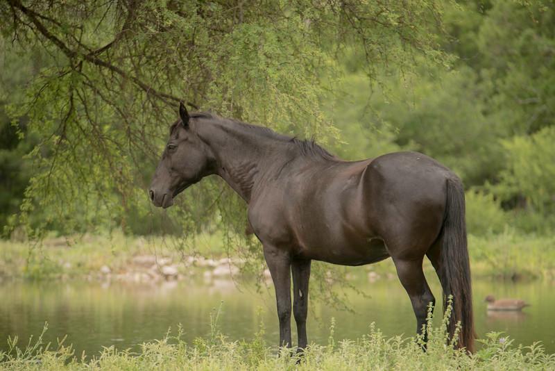Black horse pond TR_DWL0919.jpg
