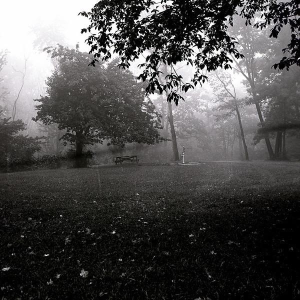 48209462_Fog forest preserve