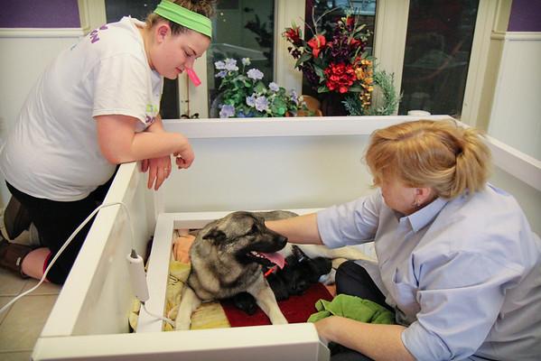 2014-02-22 Emy x Cowboy Puppy Birth Day