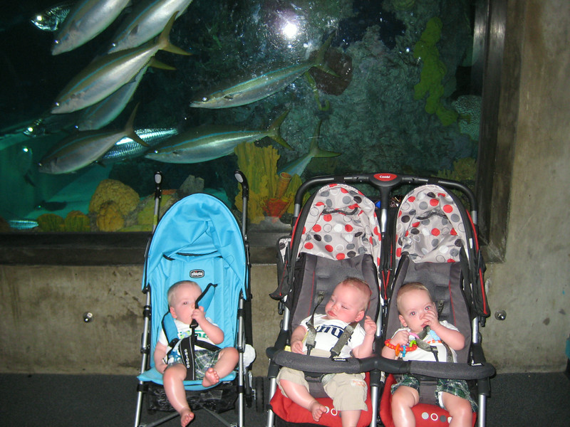 Triplets and fish
