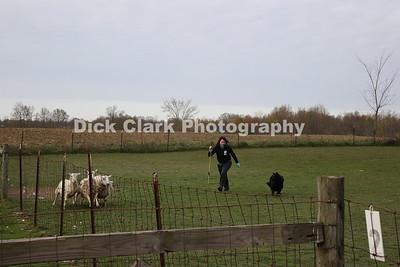 Monday Herding Trial 1 PT