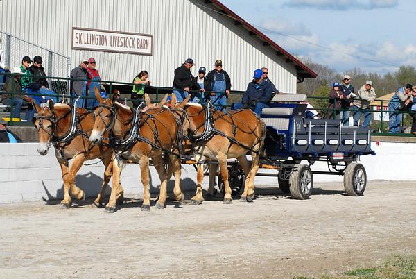 2014 Driving Mule