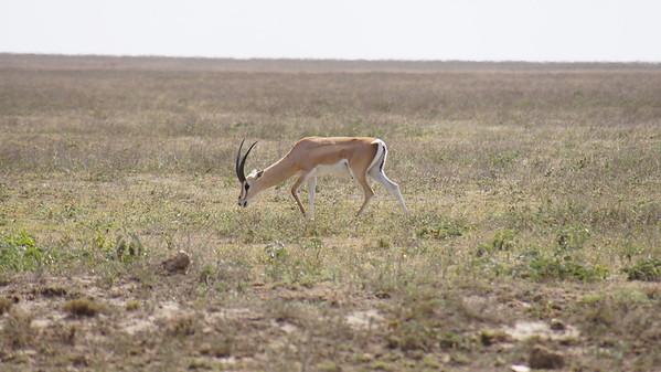 12 Serengeti National Park