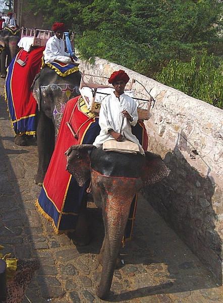 elephant transport returning from the Amber Fort, Jaipur