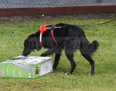 3-3-18 Dog 20
