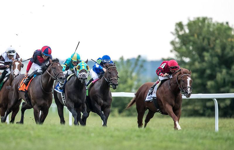 Proforma ( Munnings) wins the Kentucky Downs turf Sprint (G3) at Kentucky Downs on 9.8.2018. Joe Bravo up, Michael Stidham trainer, DARRS, Inc owner.
