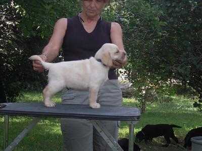 STefanie's Puppies July 19, 2009