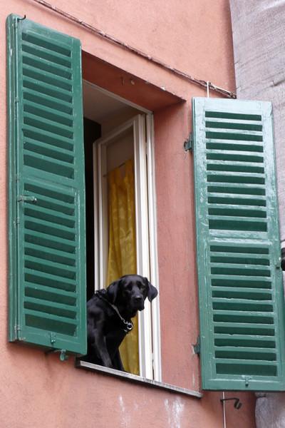 Life as a Dog. Perugia, Umbria