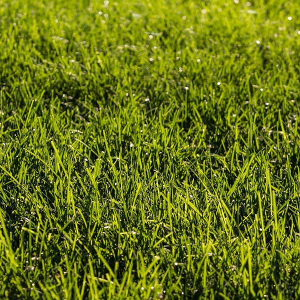 grass square-8560.jpg