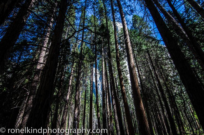 Yosemite-0006.jpg
