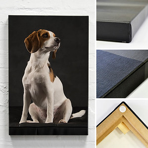 Professional dog photography products