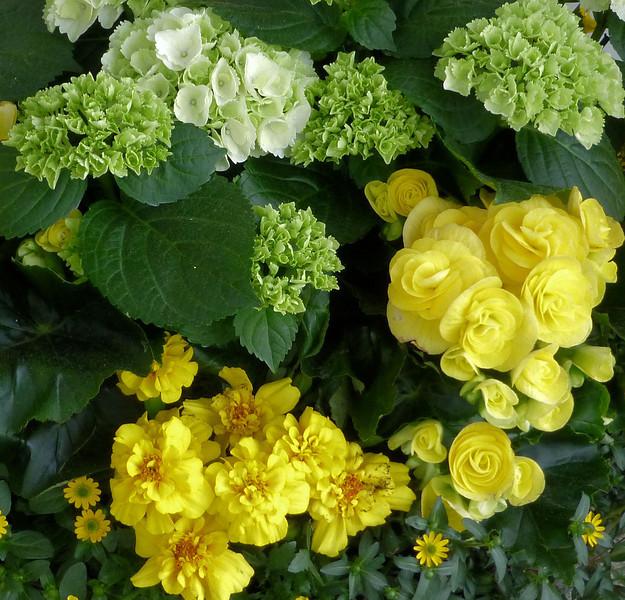 Day4-Lindau yellows w white.jpg