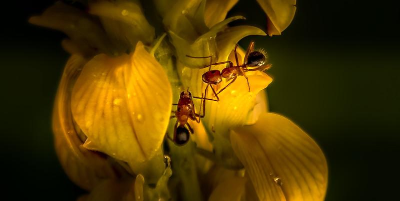 Bugs and Beetles - 42.jpg