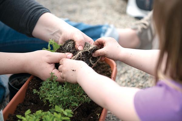 Plant a Tea Garden Workshop at Landon's Greenhouse