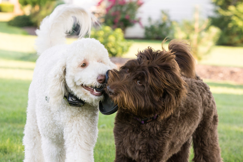 dogs-06609.jpg