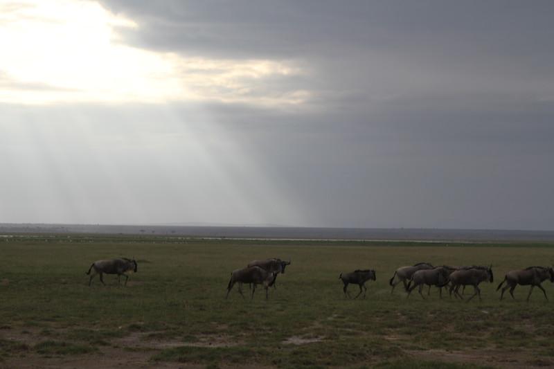 Kenya 2019 #2 2014.JPG