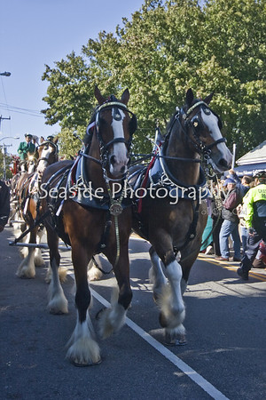 Budweiser Clydesdales at Chatham Squire 40th