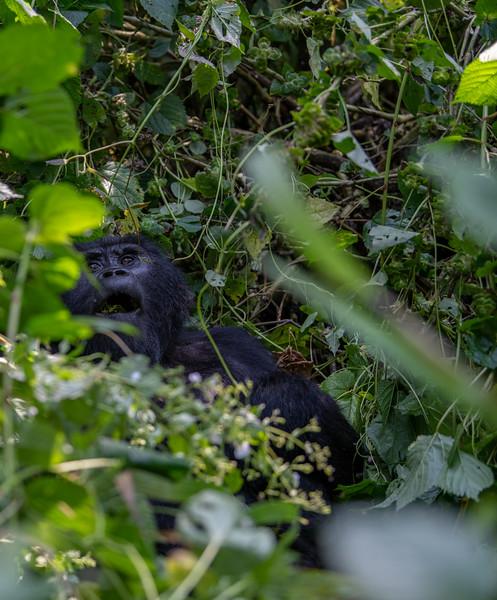 Uganda_T_Gor-957.jpg