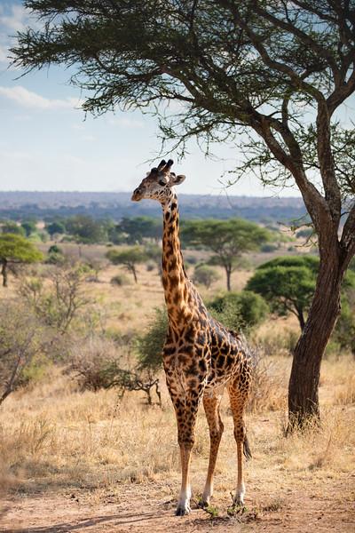 Africa - 101916 - 7803.jpg