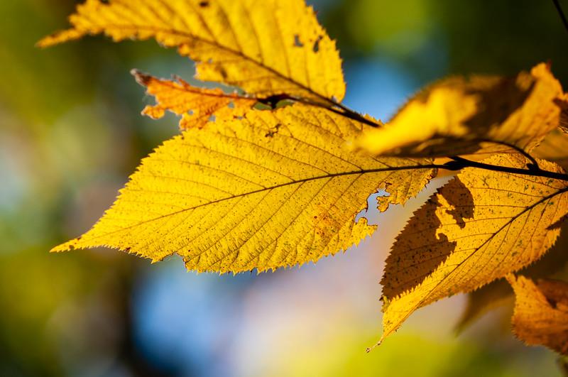 Fall_20201008_093413.jpg