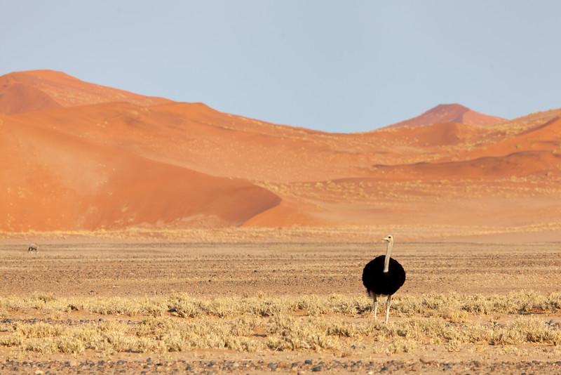 Namibia-38.jpg
