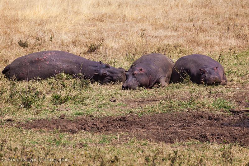 Ngorongoro-40.jpg