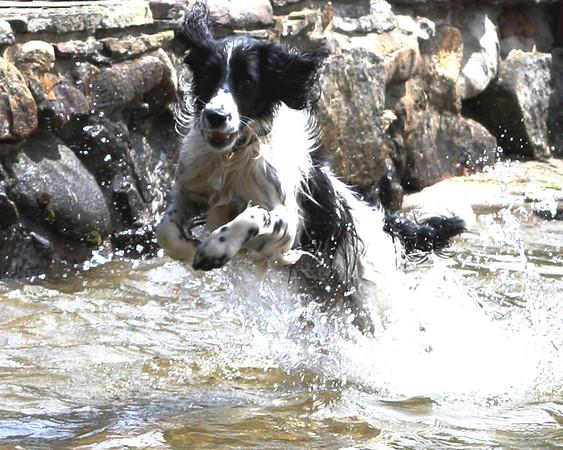 Dog Days 2009