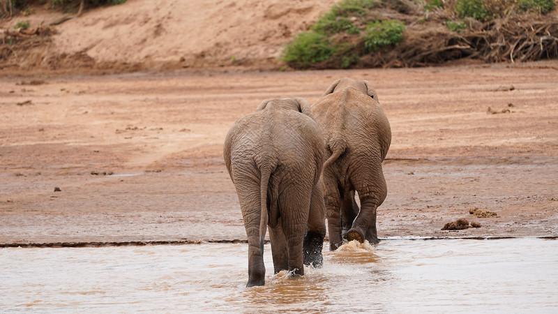 safari-2018-31.jpg