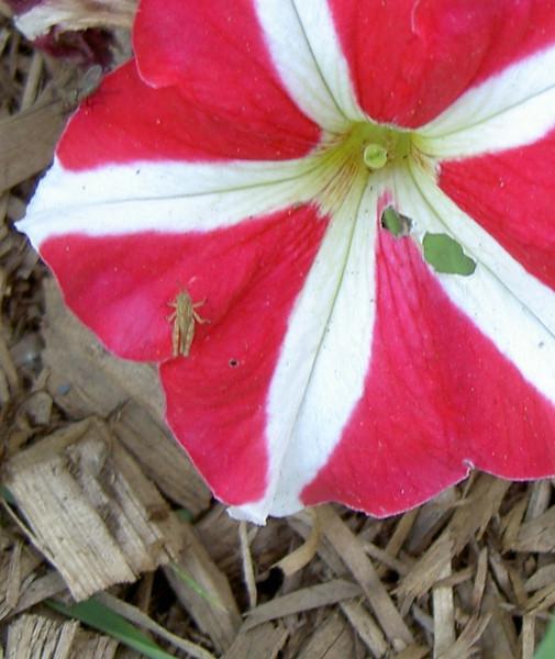 gardenality 026.JPG