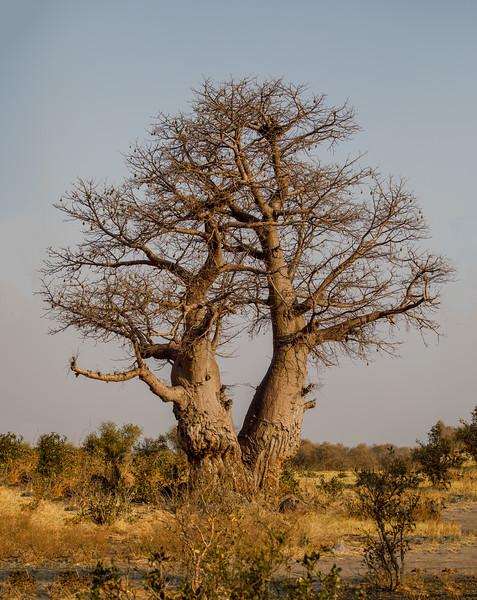 Botswana_0818_PSokol-3998-Edit.jpg