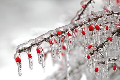 An Ice Storm