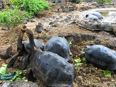 Galapagos-Santa-Cruz